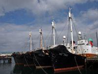 Исландские китобои «пропускают» охотничий сезон