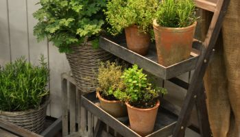 Швеция: садово-огородный бизнес цветет