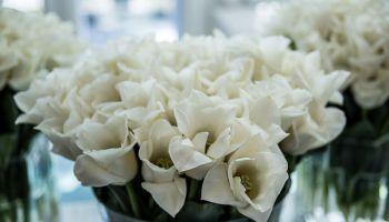 Финляндия: к 100-летию независимости страна получила в подарок «именной» сорт тюльпанов