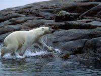 НОРВЕГИЯ: Не пугай белого медведя!