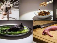 Швеция: в королевстве открылась выставка отвратительной еды