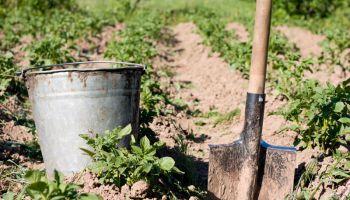 Финляндия: иностранцы смогут приехать на сельхозработы