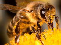 В Осло строят «трассу» для шмелей и пчел