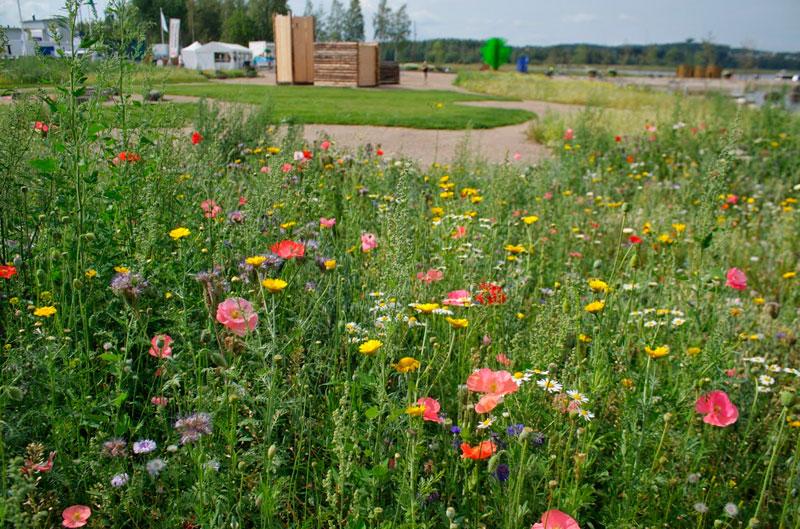 Засеивайте газон луговыми цветами!