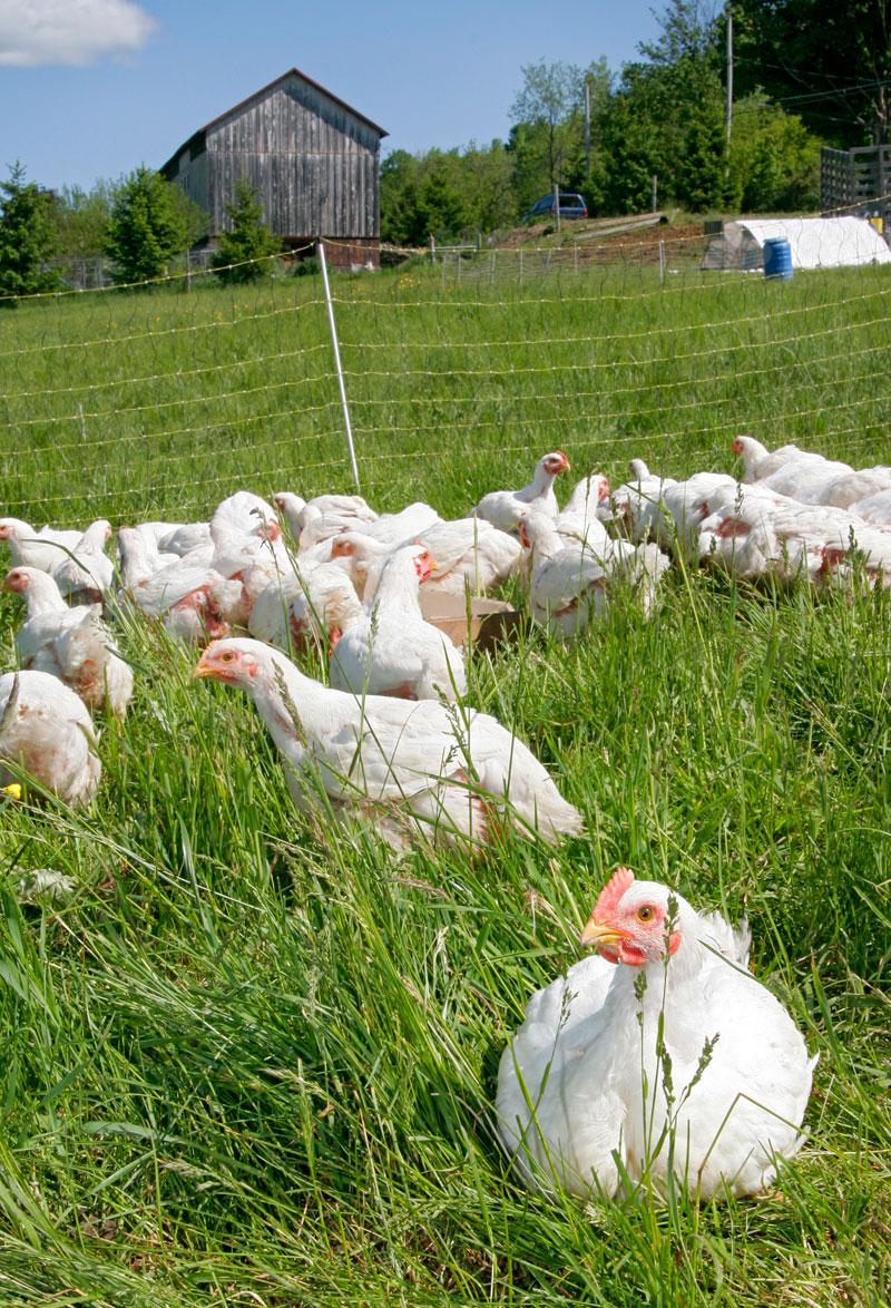 Дания: доступ на прилавок только «свободному» яйцу