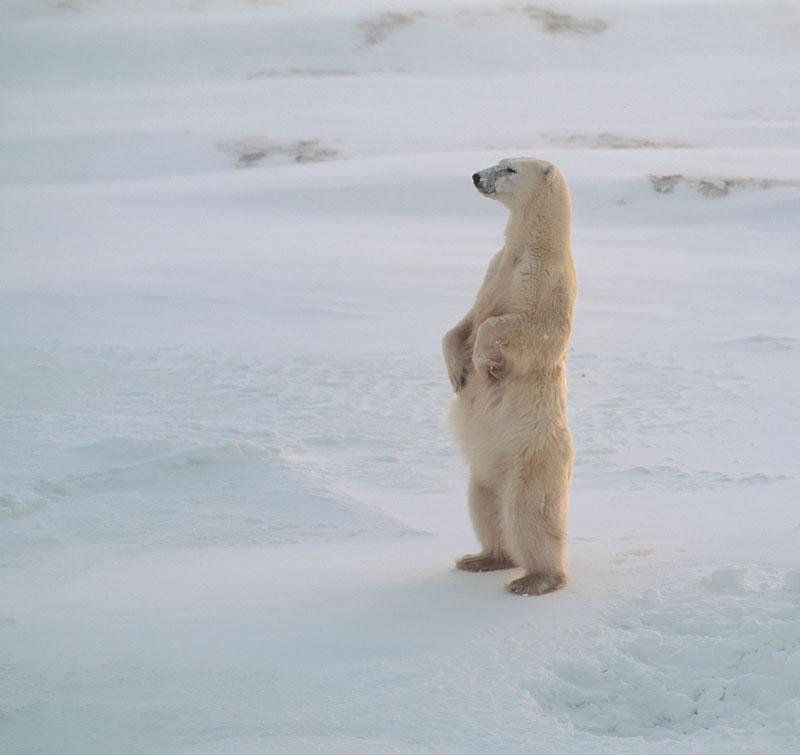 Норвегия: плавучий город как новый тренд в арктическом туризме