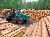 Стратегия развития лесной отрасли успешно выполнена