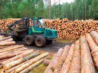 Лесная отрасль снова лидер по экспорту в Финляндии