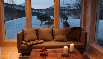 Ночь с волчьей стаей