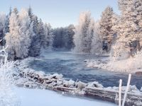 Финляндия: 1530 га леса в дар стране