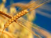 Швеция: Инициатива Брюсселя больно ударит по шведским фермерам