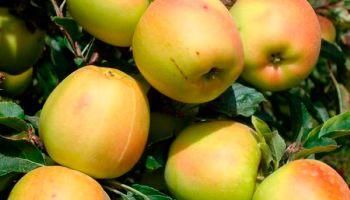 Дания: за ягодами и фруктами на улицы Копенгагена