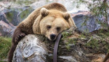 История финского зоопарка: c любовью к братьям меньшим