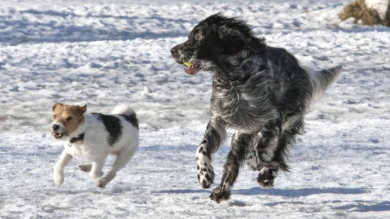 Собаке – собачья (?) жизнь