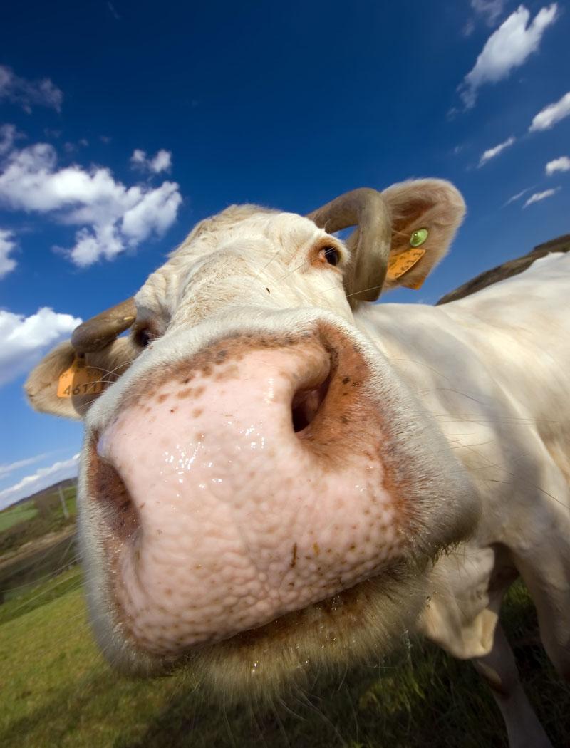 Российские санкции приносят убытки фермерам в сотни миллионов евро
