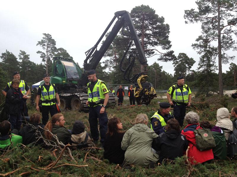 Лес на Готланде внесен в Европейскую экологическую сеть