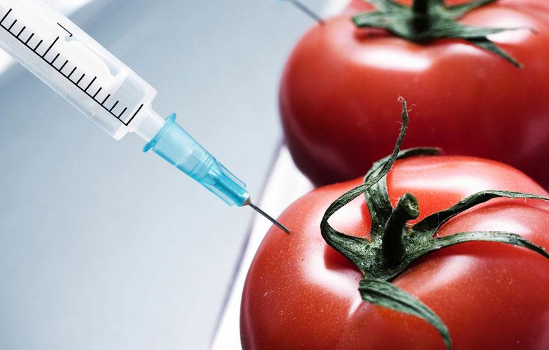 «Запрет» на запрет ГМО