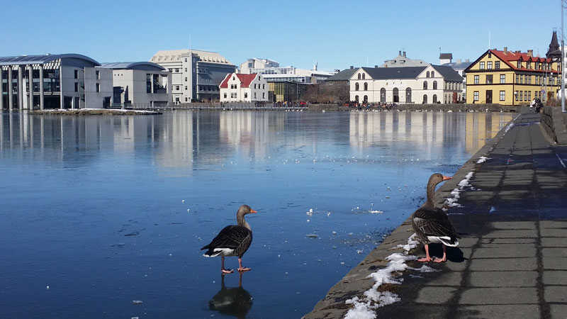 Исландская полиция занялась серыми отельерами