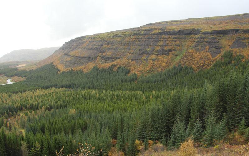 Исландия: восстановление лесов под единую государственную программу