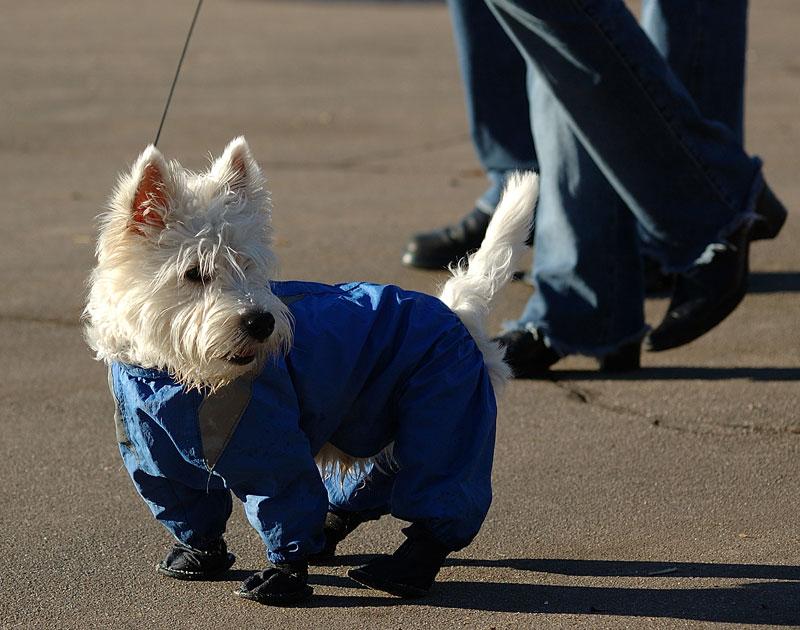 Дания: собаки – добро пожаловать!